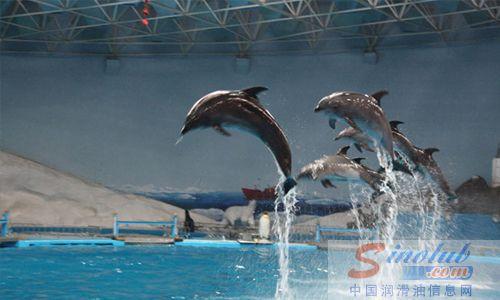海豚表演,以及一些列的滑稽和互动活动,都很精彩; 青岛极地